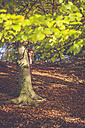 Little girl hiding behind a tree in the wood - SARF001011