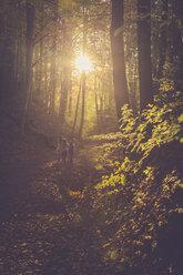 Three little girls walking through autumn forest - SARF001014