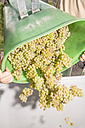 Germany, Bavaria, Volkach, harvested grapes are being poured into box - FKF000829