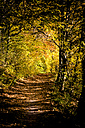 Germany, Baden-Wuerttemberg, Nature Park Schoenbuch, Forest path in autumn - LVF002193