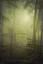 Germany, near Wuppertal, Beech forest and morning fog - DWI000281