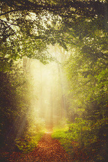 Germany, near Wuppertal, Forest path in the morning light and fog - DWI000296