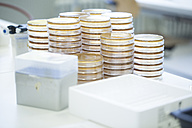 Stacks of petri dishes in a laboratory - SGF001009