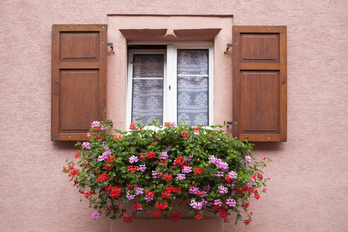 France, Alsace, Eguisheim, Window with window box and geraniums - WIF001162