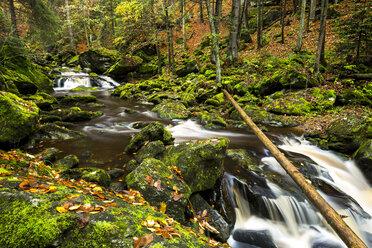 Germany, Bavarian Forest National Park, Steinbachklamm in autumn - STSF000598