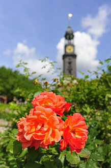 Germany, Hamburg, flower and tower of St. Michaelis Church - MIZF000733