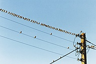 France, Brittany, Sparrows on a wire - HAWF000512