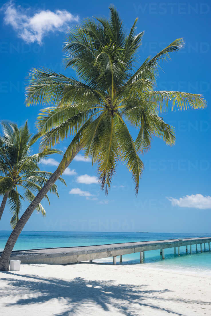 Maldives, Ari Atoll, view to palms and jetty at the beach - FLF000575 - Florian Löbermann/Westend61