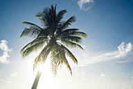 Maldives, Ari Atoll, view to palm in front of sunny sky - FLF000577