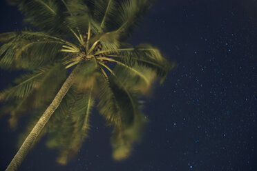 Maledives, Ari Atoll, view to palm tree and starry sky from below - FLF000569