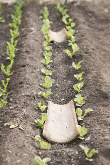Tile between delicate little plants in a garden bed - JPF000021