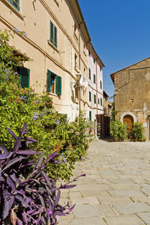 Italy, Tuscany, Castagneto Carducci, old houses and alley - UMF000705