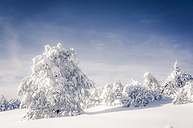 Germany, Baden-Wuerttemberg, snow covered trees at Black forest - PUF000330