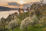 Germany, Baden-Wuerttemberg, Lake Constance, Sipplingen, blooming trees at lakeshore - SH001744