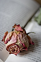 Dried rose blossom on opened book - YFF000268