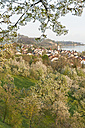 Germany, Baden-Wuerttemberg, Lake Constance, Sipplingen, blooming trees and townscape with church - SHF001778