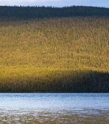 Sweden, Lapland, Norrbotten County, Kvikkjokk, lake Saggat with thick forest - JBF000193