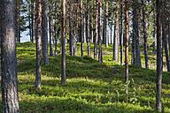 Sweden, Lapland, Norrbotten County, Kvikkjokk, forest at lake Saggat - JBF000198