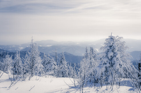 Germany, Baden-Wuerttemberg, Black Forest, snow-covered landscape - PUF000336