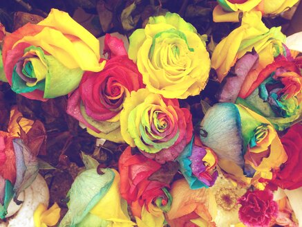 Multicolored roses, Istanbul, Turkey - RIMF000319