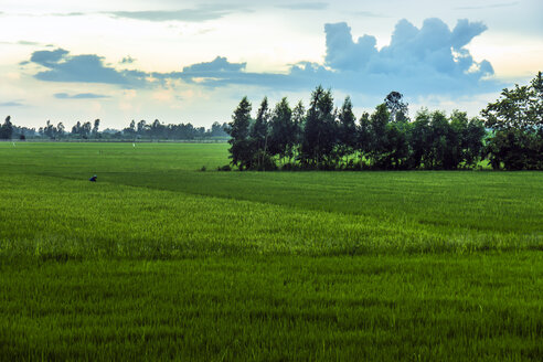 Vietnam, An Giang, Long Xuyen, view to rice fields at evening twilight - WEF000275