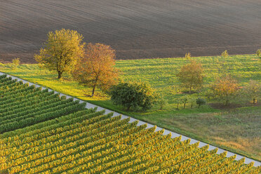 Germany, Baden-Wuerttemberg, Breisach, view to grape vines and field from above - LAF001260