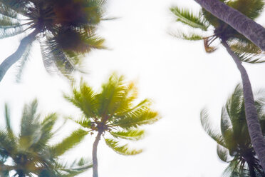 Maledives, Ari Atoll, view to palm tree tops at storm - FLF000597