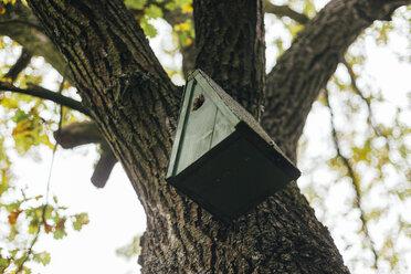 Birdhouse hanging on a tree - DWF000202