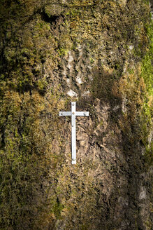Belgium, High Fens, steel sheet crucifix fixed at tree trunk - HLF000813