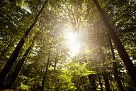Germany, view to tree tops at sunlight - STKF001084