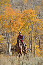 USA, Wyoming, Big Horn Mountains, riding cowboy in autumn - RUEF001296