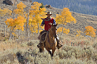 USA, Wyoming, Big Horn Mountains, riding cowboy in autumn - RUEF001298