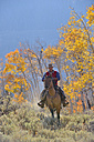 USA, Wyoming, Big Horn Mountains, riding cowboy in autumn - RUEF001336
