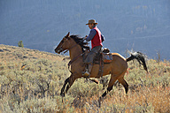 USA, Wyoming, Big Horn Mountains, riding cowboy in autumn - RUEF001315