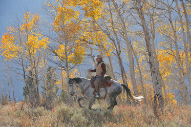USA, Wyoming, Big Horn Mountains, riding cowboy in autumn - RUEF001339