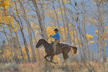USA, Wyoming, Big Horn Mountains, riding cowboy in autumn - RUEF001319
