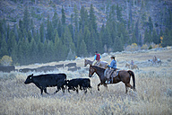 USA, Wyoming, Big Horn Mountains,  cowboys and cowgirls herding cattles in open range - RUE001347