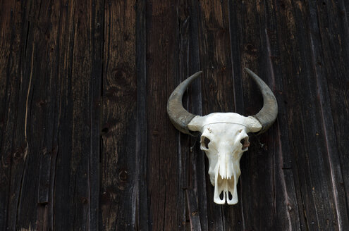 Germany, Constance, skull of a cattle on wooden wall of a barn - JEDF000206