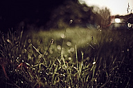Grass on meadow - DWF000222