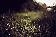Grass on meadow - DWF000222