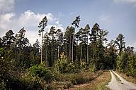 Germany, Baden-Wuerttemberg, Friolzheim, forest - DW000218