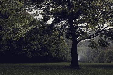 Germany, Baden-Wuerttemberg, Pforzheim, tree on meadow - DW000220