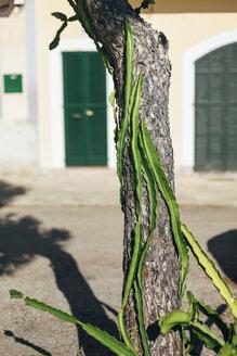 Spain, Mallorca, Portocolom, tree - DW000231
