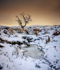 UK, Scotland, Isle of Skye, tree in winter - SMAF000280