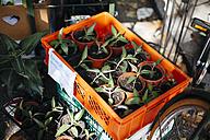Plants at flea market - DWF000236