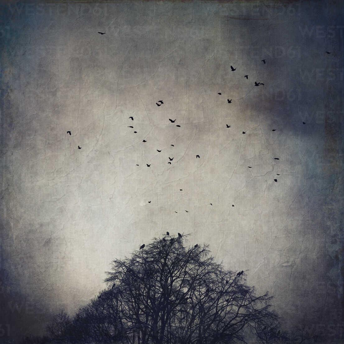 Germany flock of crows flying over bare trees - DWIF000369 - Dirk Wüstenhagen/Westend61