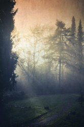 Germany, forest glade in morning light - DWI000371