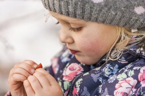 Little girl wearing wool cap and winter jacket looking at something in her fingers - TCF004480