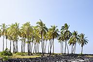 USA, Hawaii, Big Island, Honaunau-Napoopoo, palms, and igneous rocks at Puuhonua o Honaunau - BRF000902