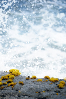 USA, Hawaii, Big Island, Pahala, crab sitting on rock in front of splashing sea foam - BRF000907